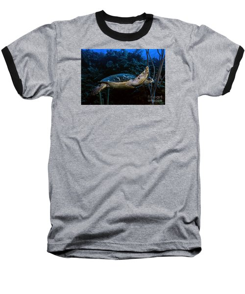 Hawksbill Turtle Baseball T-Shirt by JT Lewis