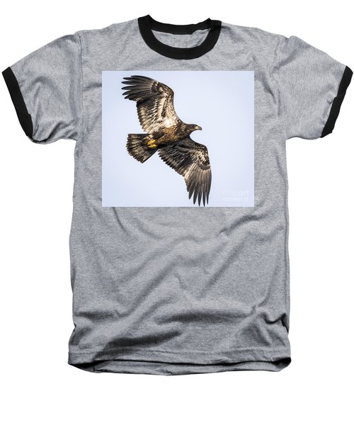 Juvenile Bald Eagle  Baseball T-Shirt