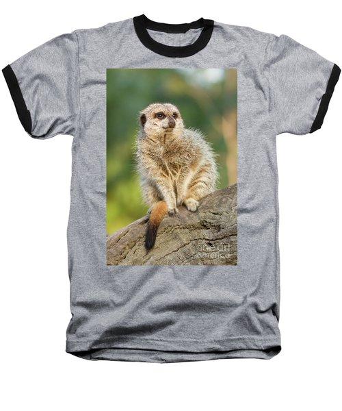 Meerkat Baseball T-Shirt by Craig Dingle