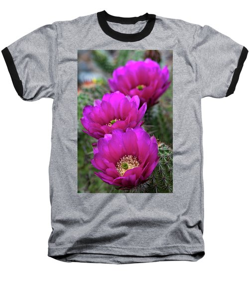 Baseball T-Shirt featuring the photograph Pink Hedgehog Cactus  by Saija Lehtonen