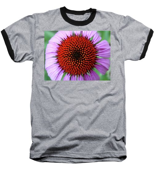 Purple Coneflower  Baseball T-Shirt by Rebecca Overton