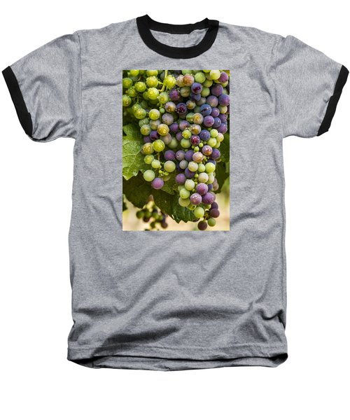 Red Wine Grapes Hanging On The Vine Baseball T-Shirt