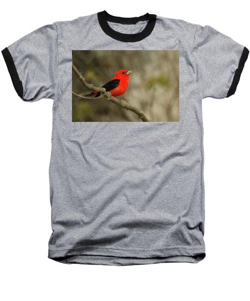 Scarlet Tanager Baseball T-Shirt by Alan Lenk