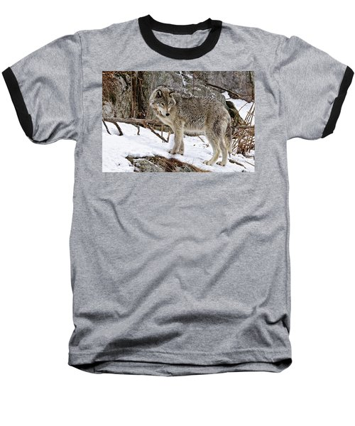 Baseball T-Shirt featuring the photograph Timber Wolf In Winter by Michael Cummings