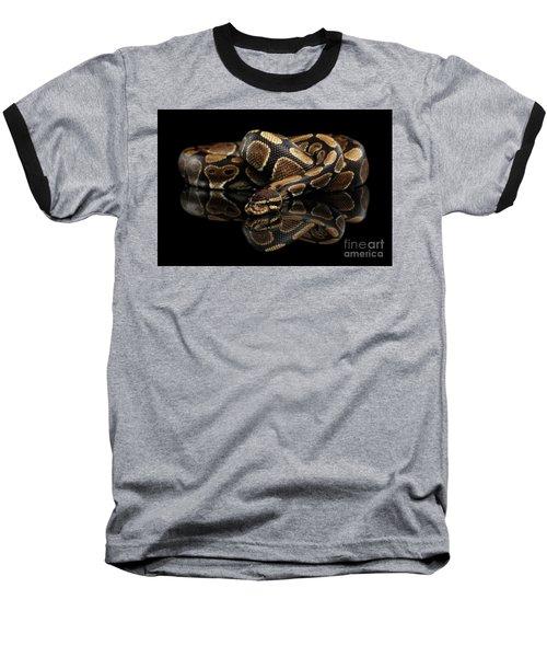 Ball Or Royal Python Snake On Isolated Black Background Baseball T-Shirt