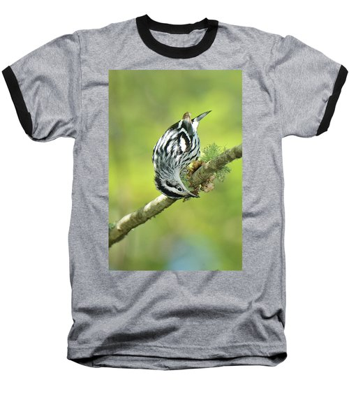 Black And White Warbler Baseball T-Shirt