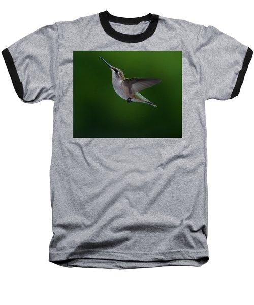 Female Ruby Throated Hummingbird Baseball T-Shirt by Brenda Jacobs