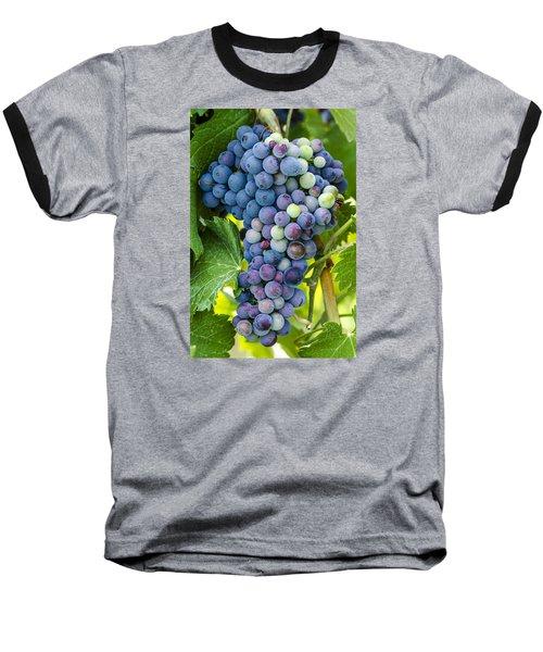 Red Wine Grapes Baseball T-Shirt by Teri Virbickis