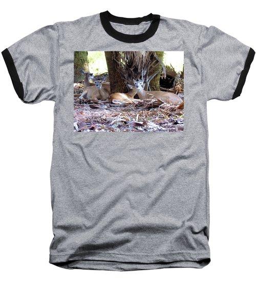 4 Wild Deer Baseball T-Shirt by Rosalie Scanlon