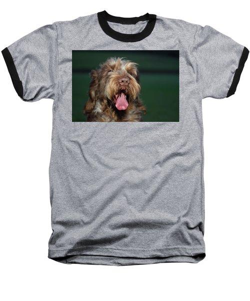 Brown Roan Italian Spinone Dog Head Shot Baseball T-Shirt