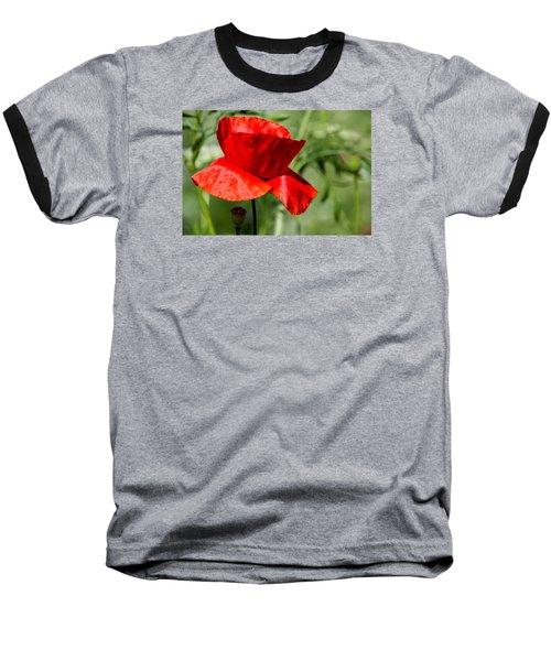 Poppy Baseball T-Shirt by Martina Fagan
