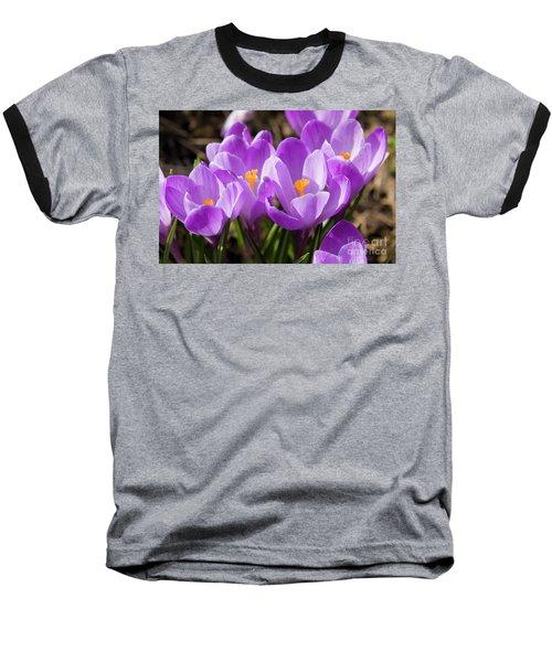 Purple Crocuses Baseball T-Shirt