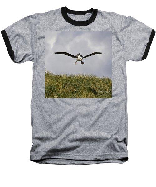 Black-browed Albatross Baseball T-Shirt by Jean-Louis Klein & Marie-Luce Hubert