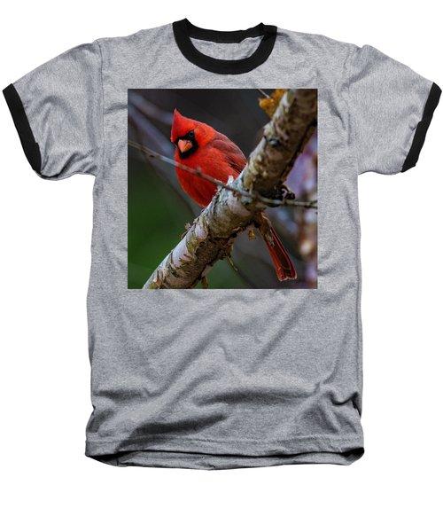 A Cardinal In Spring   Baseball T-Shirt