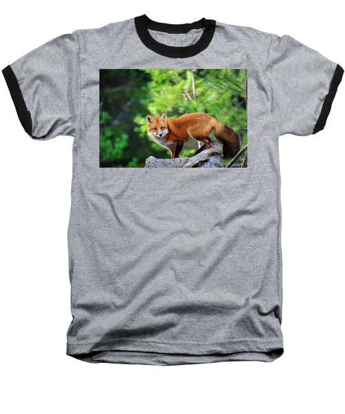 A Cunning Hunter Baseball T-Shirt by Gary Hall