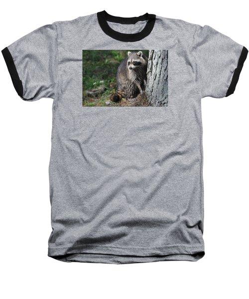 A Curious Raccoon Baseball T-Shirt by Lisa DiFruscio