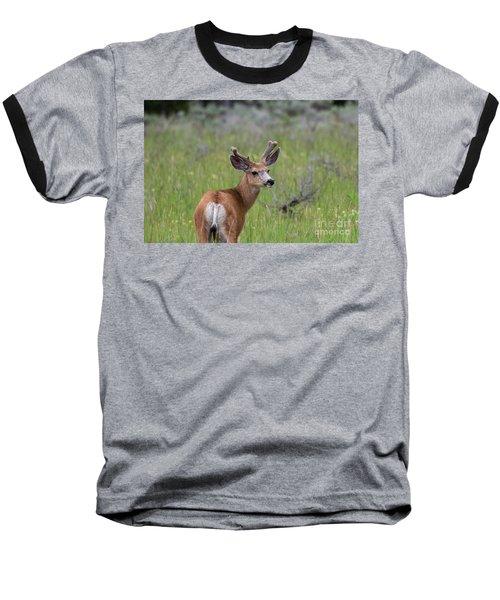 A Deer In Yellowstone National Park  Baseball T-Shirt