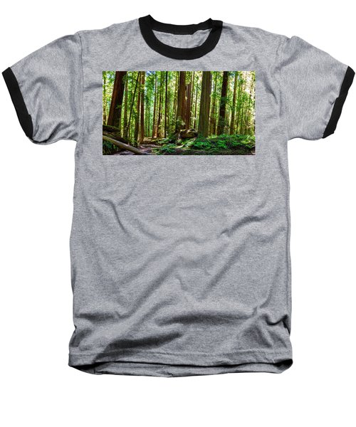 A Family Of Redwoods Panorama Baseball T-Shirt
