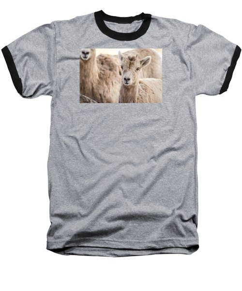 Baseball T-Shirt featuring the photograph A Little Lamb Cuteness by Yeates Photography