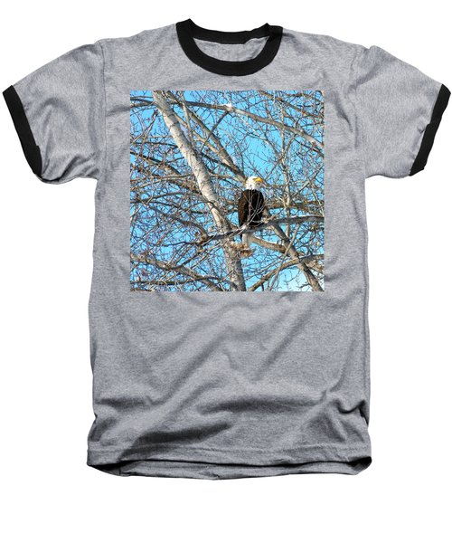 Baseball T-Shirt featuring the photograph A Majestic Bald Eagle by Will Borden