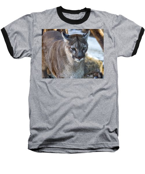 A Stunning Mountain Lion Baseball T-Shirt