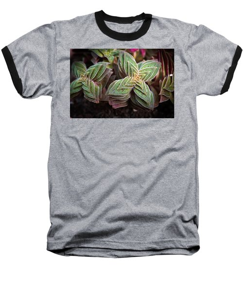 Baseball T-Shirt featuring the photograph A Succulent Plant by Catherine Lau