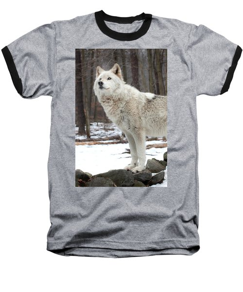 A Wolfs Modeling Pose Baseball T-Shirt