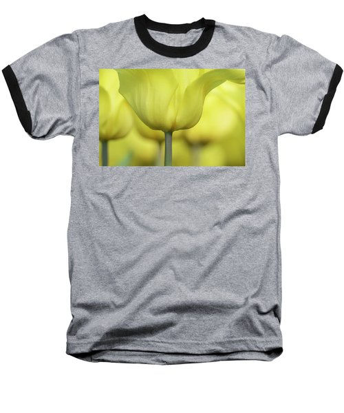 Abstract Yellow Tulips Flowers Photography Online Art Print Shop Baseball T-Shirt by Artecco Fine Art Photography