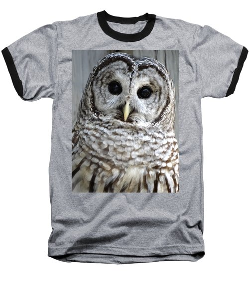 Adorable Barred Owl  Baseball T-Shirt by Rebecca Overton