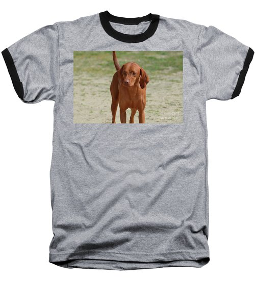Adorable Redbone Coonhound Standing Alone Baseball T-Shirt