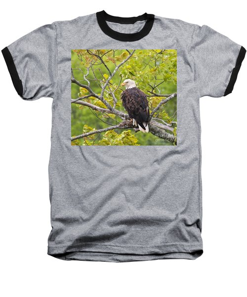 Adult Bald Eagle Baseball T-Shirt by Debbie Stahre