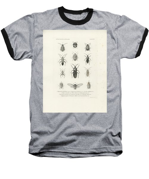 African Bugs And Insects Baseball T-Shirt