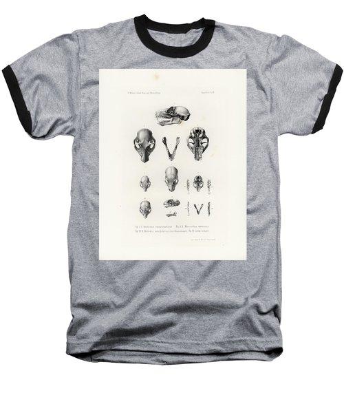 African Mammal Skulls Baseball T-Shirt