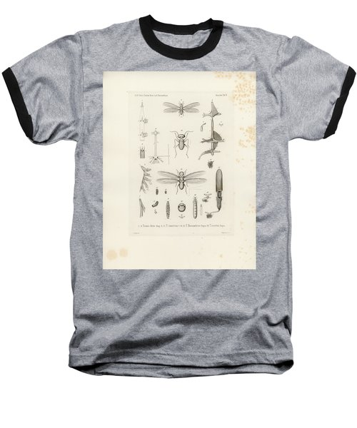 African Termites And Their Anatomy Baseball T-Shirt by W Wagenschieber
