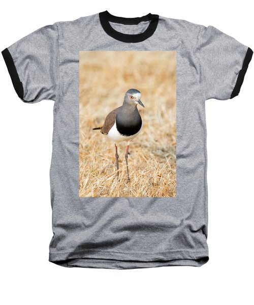 African Wattled Lapwing Vanellus Baseball T-Shirt by Panoramic Images