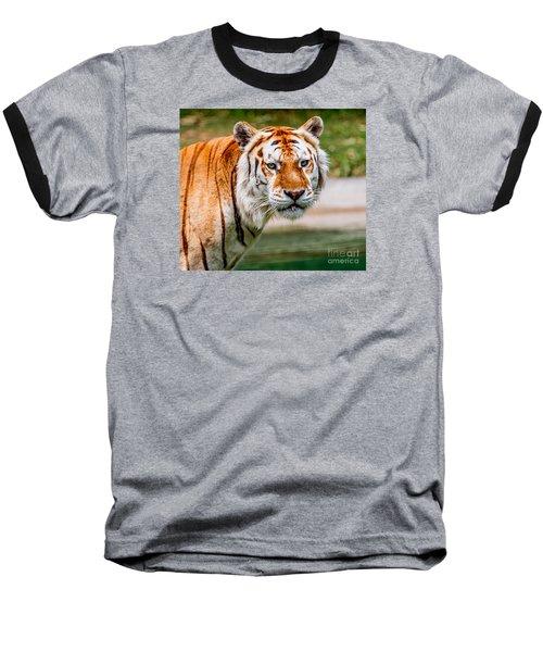 Aging Tiger Baseball T-Shirt