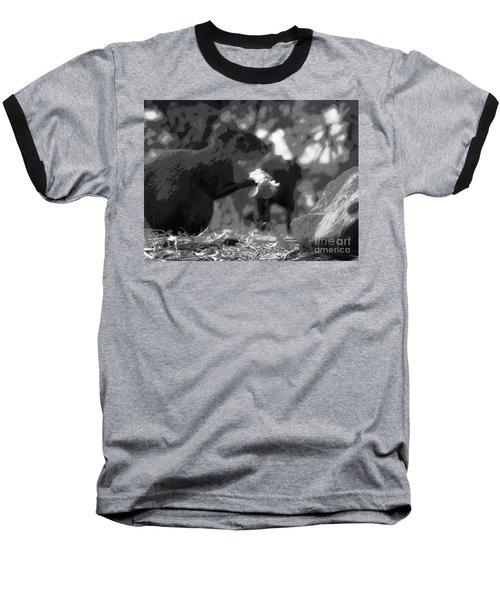 Agouti At Supper Baseball T-Shirt