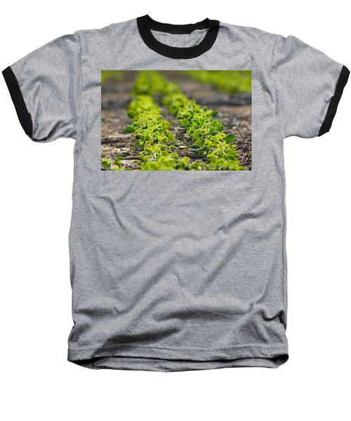 Agriculture- Soybeans 1 Baseball T-Shirt