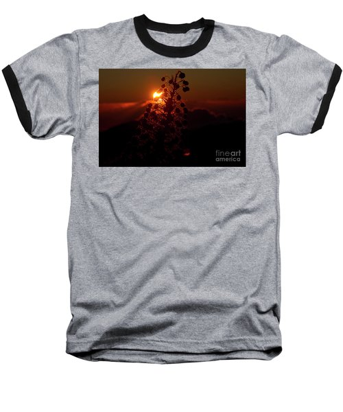 Ahinahina - Silversword - Argyroxiphium Sandwicense - Sunrise Baseball T-Shirt by Sharon Mau