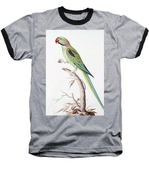 Alexandrine Parakeet Baseball T-Shirt by Nicolas Robert