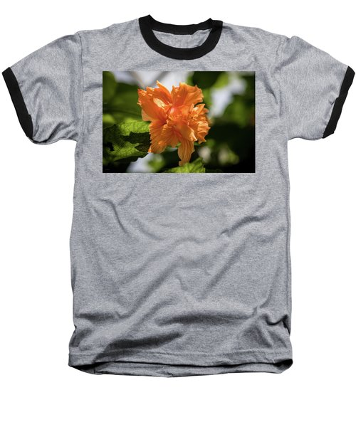Allan Gardens Orange Baseball T-Shirt