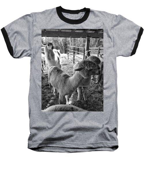 Alpaca Meeting  Baseball T-Shirt