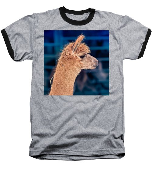 Alpaca Wants To Meet You Baseball T-Shirt by TC Morgan