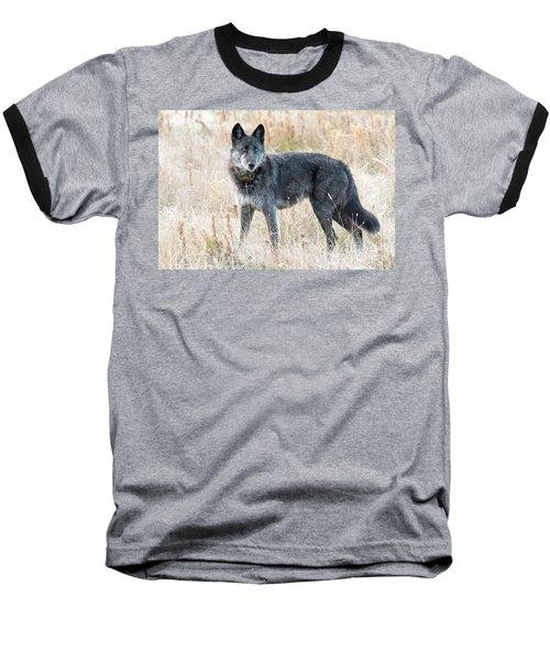 Alpha Female Baseball T-Shirt