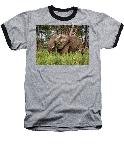 Alpha Male Elephant Baseball T-Shirt