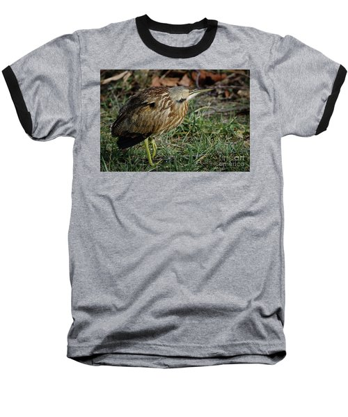 American Bittern Baseball T-Shirt by Douglas Stucky