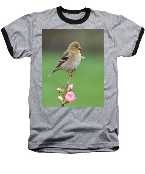 Baseball T-Shirt featuring the photograph American Goldfinch by Doug Herr