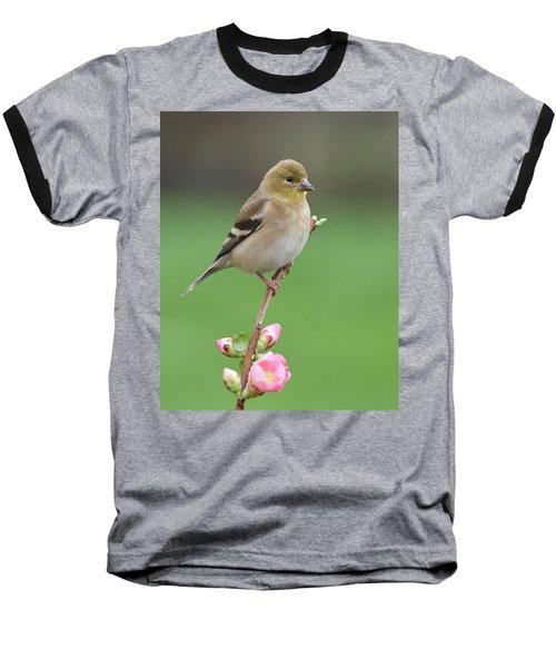 American Goldfinch Baseball T-Shirt by Doug Herr