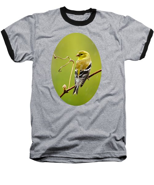 American Goldfinch In The Rain Baseball T-Shirt by Christina Rollo