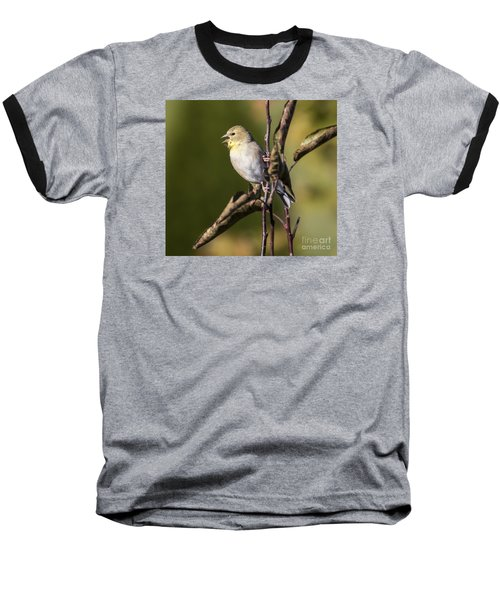 Baseball T-Shirt featuring the photograph American Goldfinch In Fall Colors  by Ricky L Jones
